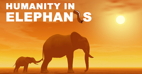 Humanity in Elephants