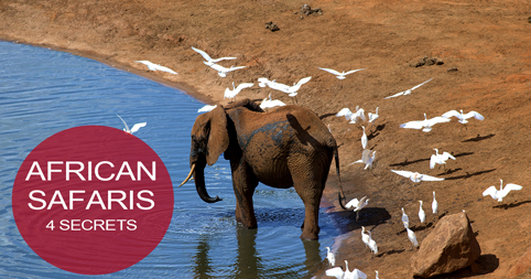 African Safaris - 4 Secrets