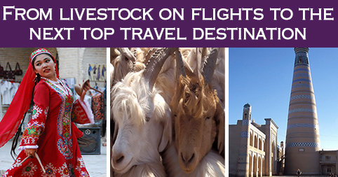 From livestock on flights to the next top travel destination