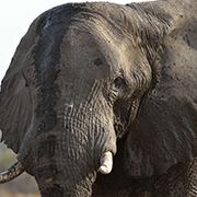Botswana Wildlife Breakaway Safari