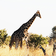Intimate Botswana and Zimbabwe Encounter