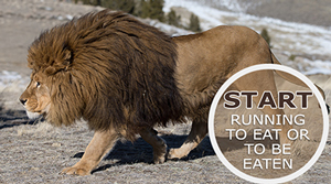 Start running to eat or to be eaten