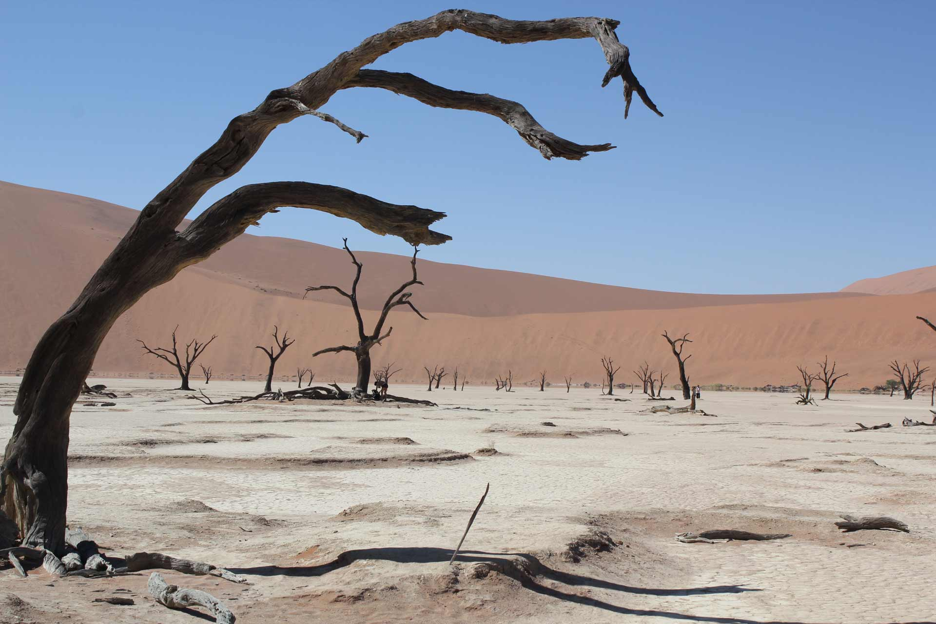 Dead acacia tree in Sossusvlei Pan in the Namib-Naukluft National Park