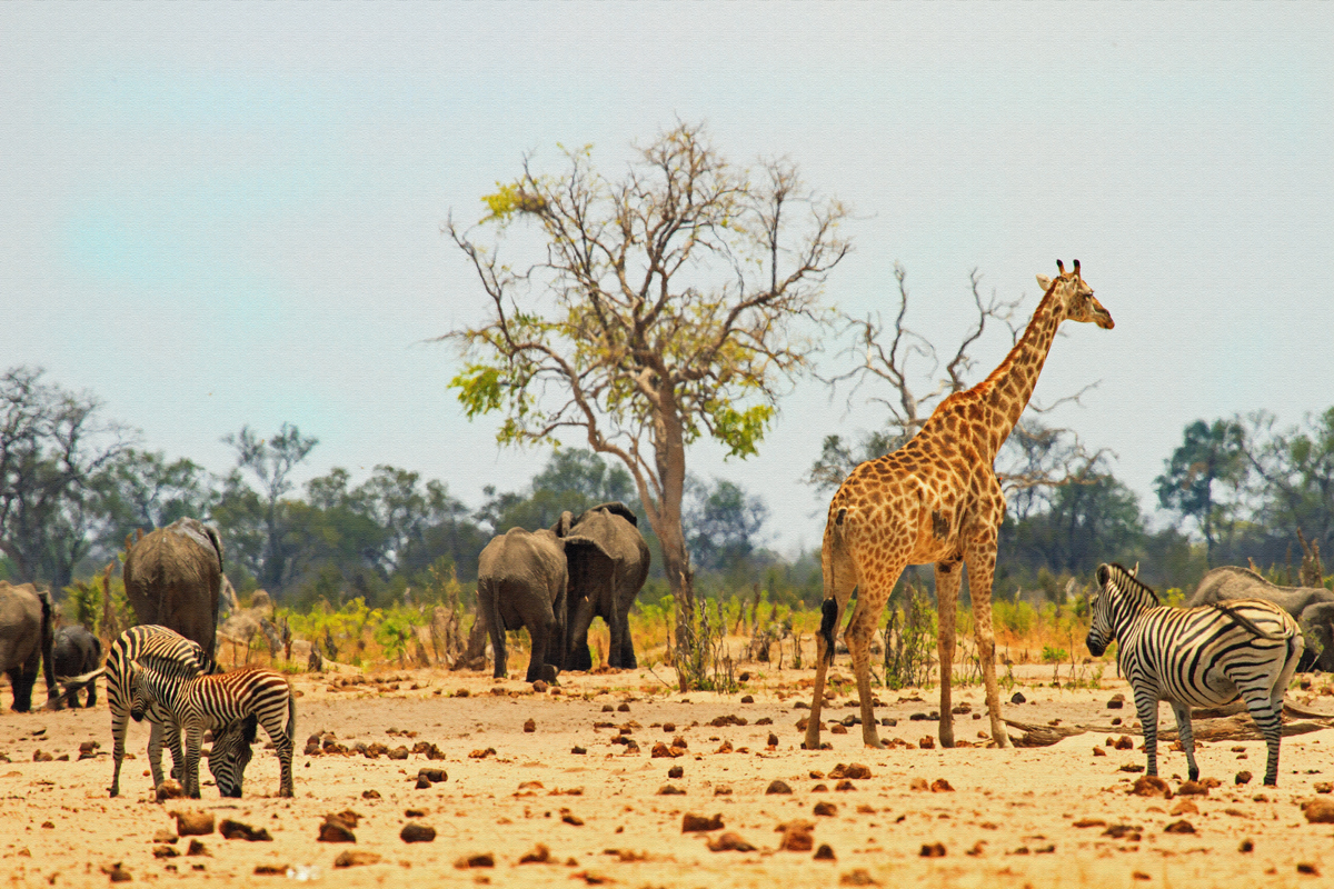View of Hwange National Park