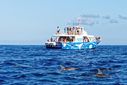 A group of tourists on a whale watching trip in the Indian Ocean