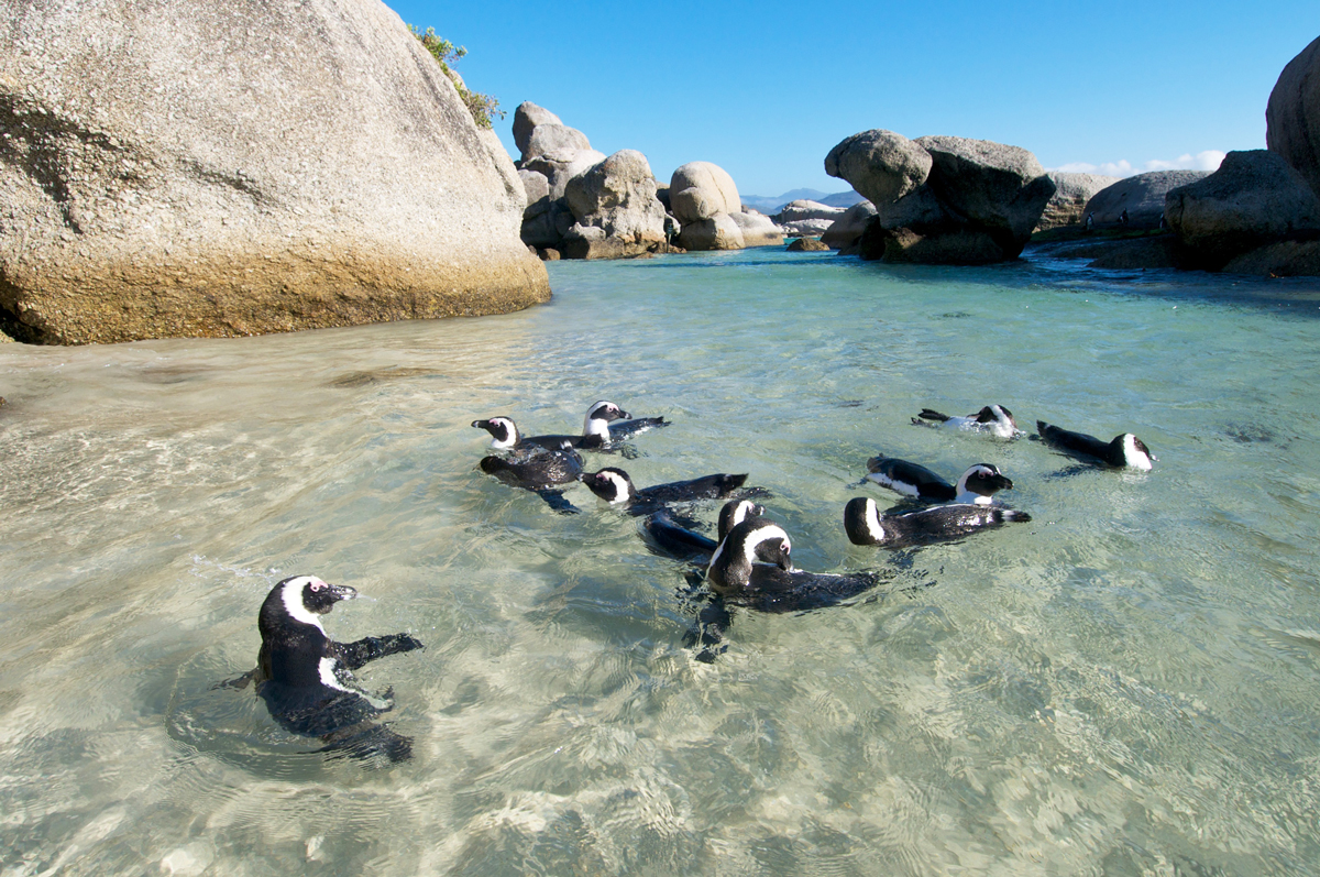 Penguin colonies of Boulders Beach