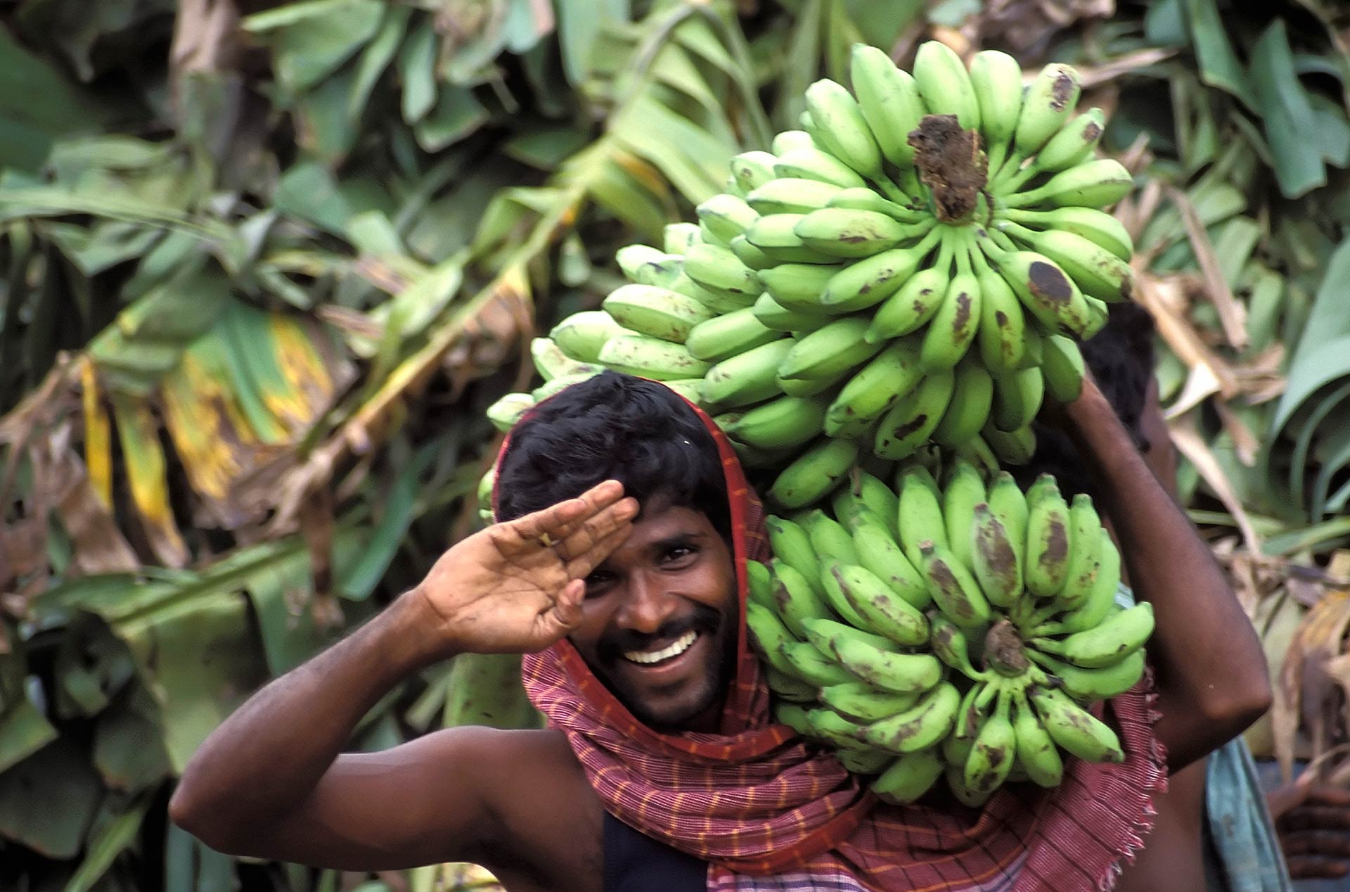 Man carrying banana bunches at the Flower & Fruit Bazaar, Chennai, Tamil Nadu, India
