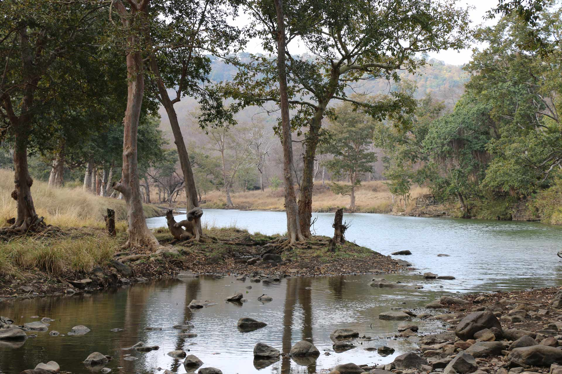 Landscape view Central Tala zone of Bandhavgarh National Park India. This biodiverse park is full of tropical forest.