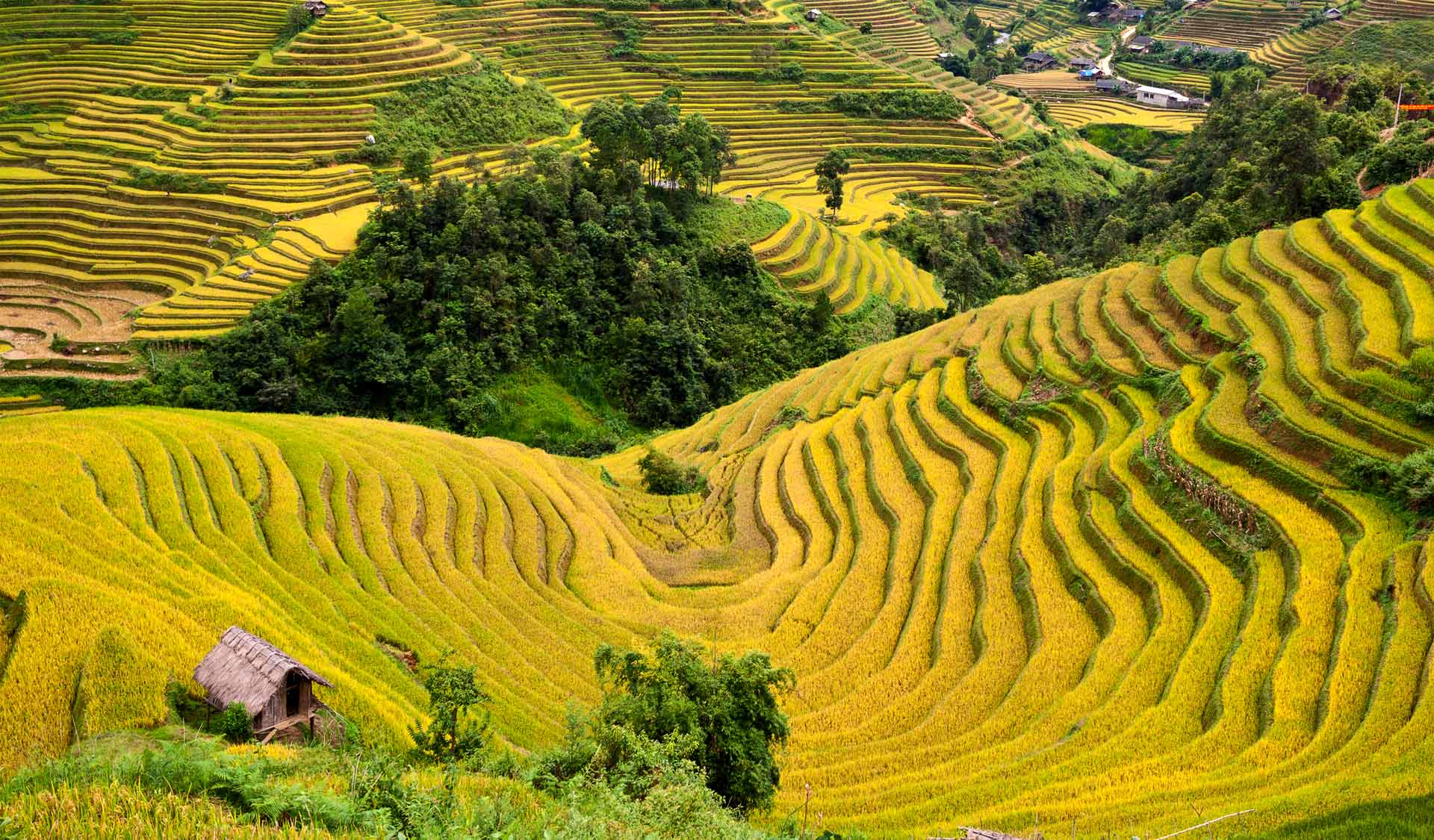 Terraces of Grain. Samosir Island North Sumatra, Indonesia.