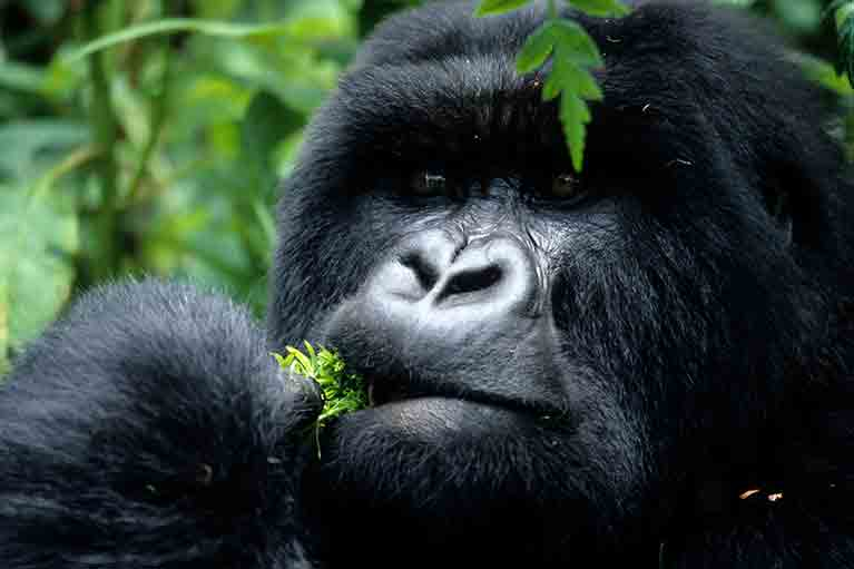 Natural Heritage Safari of Uganda & Rwanda - African Safari Packages