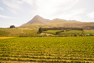 Whisky, Wine & Wonders of South Africa